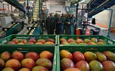 Alertan de un incremento del 16% en las intercepciones de organismos nocivos en el sector agroalimentario en la Unión Europea