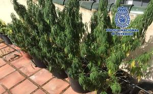 Desmantelan una plantación de marihuana en la azotea de un piso céntrico de Marbella