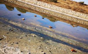 Hallan una decena de gallos decapitados en la desembocadura del Guadalhorce