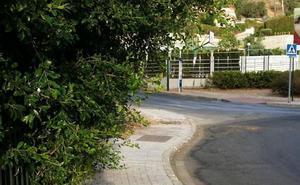 Avenida del Mayorazgo: invasión de árboles
