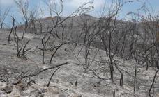 El incendio de Estepona en fotos