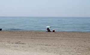 Playas de Manilva, el refugio de la azucena de mar