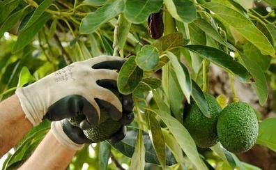 La Junta abre el plazo de ayudas para las organizaciones de productores de frutas y hortalizas