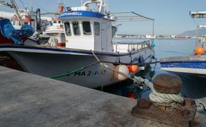 Marbella amplía un mes más la veda al pulpo, especie que lidera las ventas en la lonja con 1,3 millones