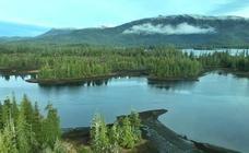 Trump permitirá la explotación de un bosque protegido de Alaska