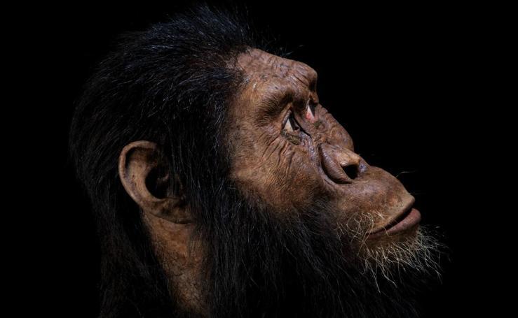 Encuentran al vecino de Lucy, un cráneo de hace 3.8 millones años
