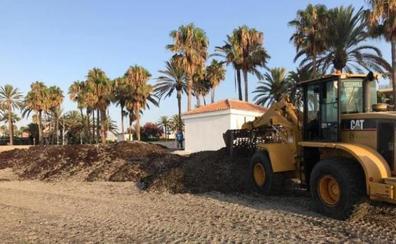 La delegación de Limpieza retira más de 1.300 toneladas de alga invasora asiática en el litoral marbellí