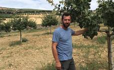 Proyectan una planta de procesado de pistacho en Ronda