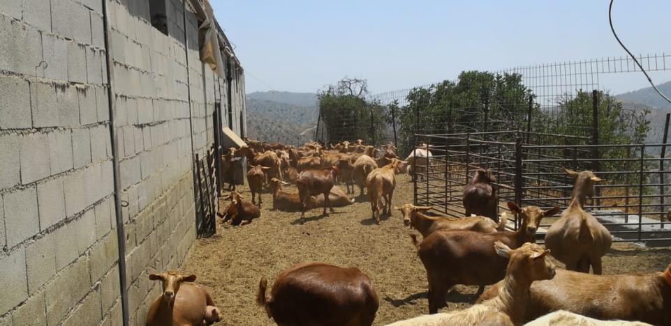 COAG claims the urban regularization of livestock farms