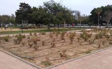 Huelin: falta de riego en un parque
