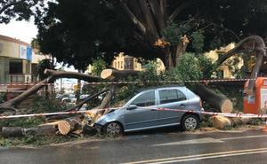 Inundaciones y caídas de árboles, efectos principales de la tromba en Málaga capital