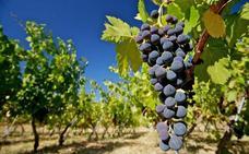 Implantan un ciclo de técnico superior en vitivinicultura en Ronda