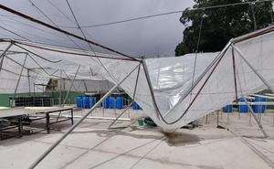 El temporal daña uno de los invernaderos del centro Grice Hutchinson de la UMA