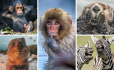 'The Comedy Wildlife': las fotografías de animales más divertidas