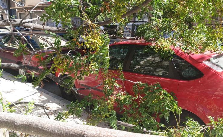 Daños en un vehículo por la caída de una rama en el Camino San Rafael