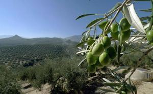 La Junta cifra en 315 millones de euros el impacto de los aranceles de EE UU en las exportaciones agroalimentarias