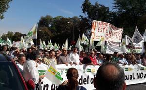 Olivareros malagueños secundan en Madrid la manifestación para reclamar precios justos para el aceite de oliva