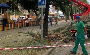 Revisan las palmeras de Avenida del Mediterráneo de cara a la feria de San Pedro