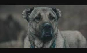 La cinta turca 'Gümus' se lleva el premio al mejor cortometraje de Málaga 4K Fest