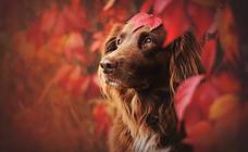 Las mejores fotografías de perros de Anne Geier