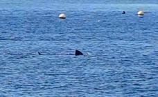 Un gran tiburón de casi cuatro metros se acerca a la orilla de la playa de Calahonda, en Granada