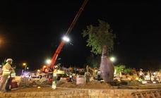Marbella ultima los trabajos de remodelación de la rotonda del Trapiche