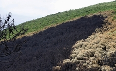 Lo que el fuego se llevó en Sierra Bermeja
