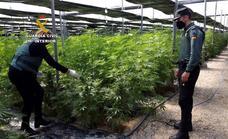 Localizadas desde un helicóptero dos plantaciones de marihuana en las estribaciones de Sierra Nevada