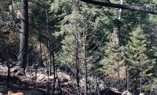 La Plataforma Sierra Bermeja Parque Nacional defiende que sí se habrían quemado un millar de pinsapos