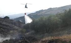 Un incendio calcina al menos seis hectáreas de matorral y olivar en Periana