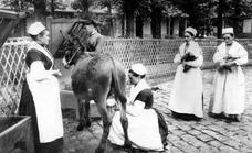 La milagrosa leche de burra, alimento y medicina