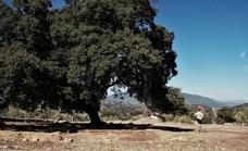 La II Eco Maratón La Donaira donará fondos a los afectados por el incendio de Sierra Bermeja y el Valle del Genal