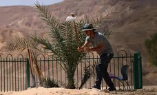 Milagro botánico en Tierra Santa