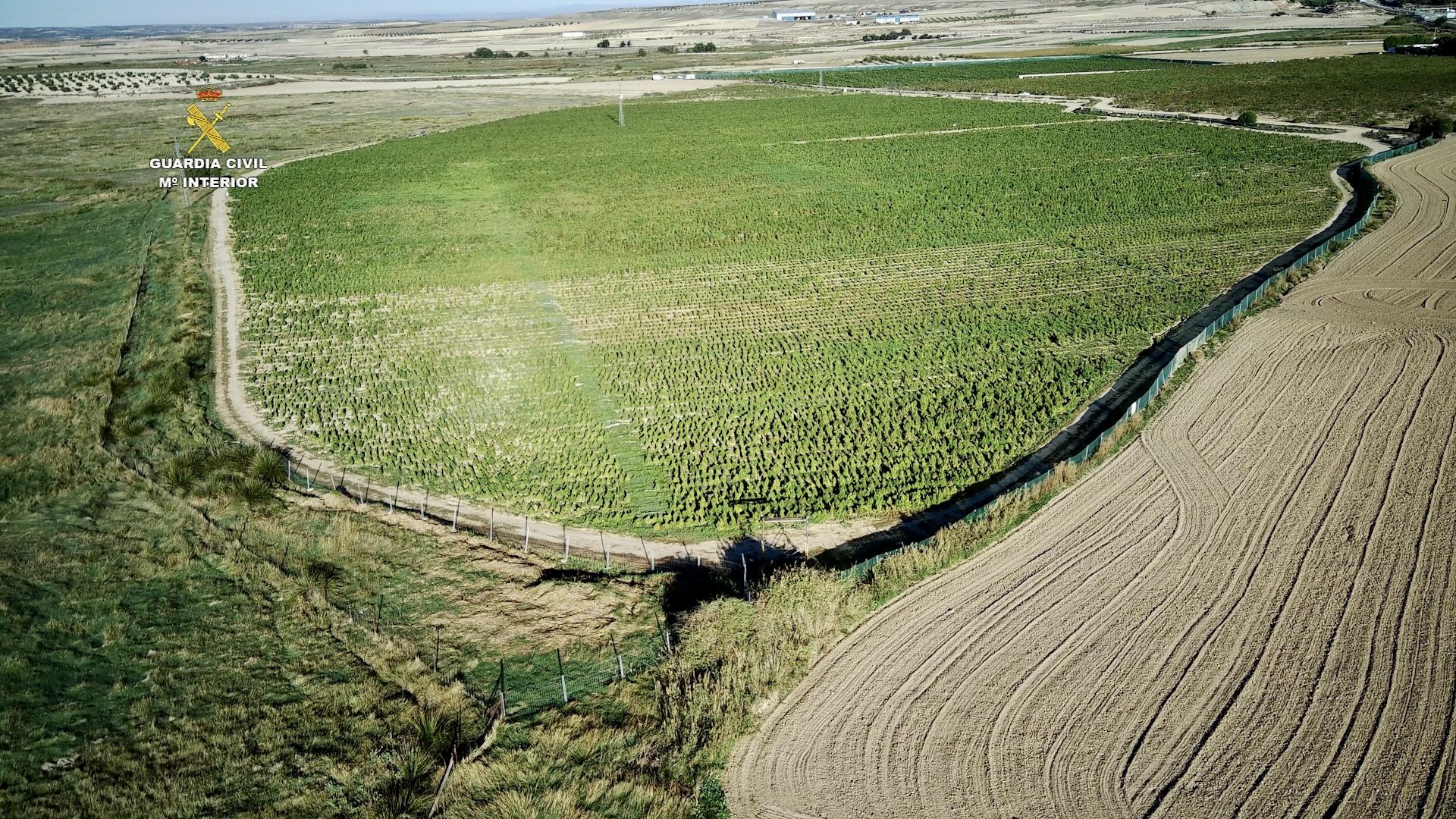 Desmantelan el 'Falcon Crest' de las plantaciones de marihuana