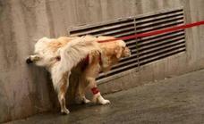 Sancionan con 50 euros por no llevar los utensilios para recoger las heces de perro o diluir su orina