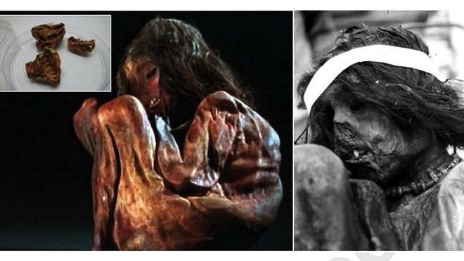 La momia de un niño sacrificado por los incas hace 500 años revela un linaje genético desconocido