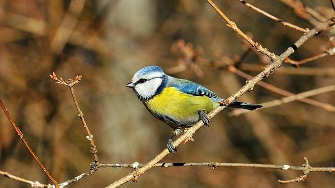 5 lugares imprescindibles para ver aves en España