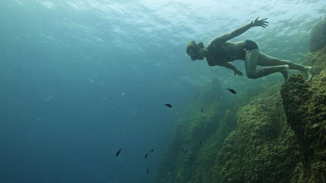 El Mediterráneo ha perdido un 34% de sus peces y un 41% de focas desde 1950