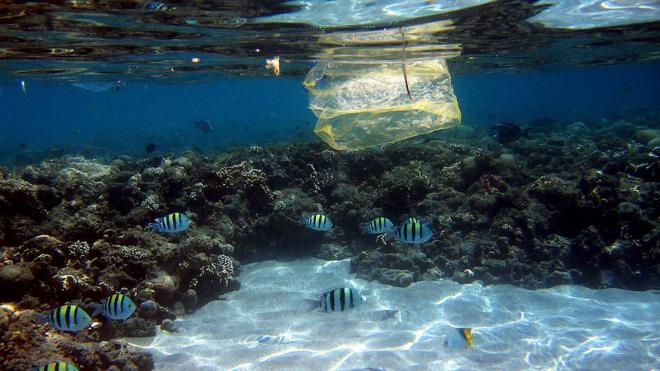 Hay un plástico cada cuatro metros en el Mediterráneo