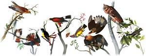 John James Audubon y sus aves en la portada de Google