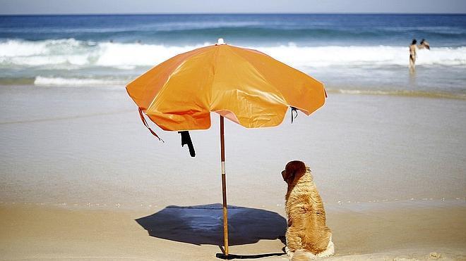 Cosas que no sabías que están prohibidas en la playa