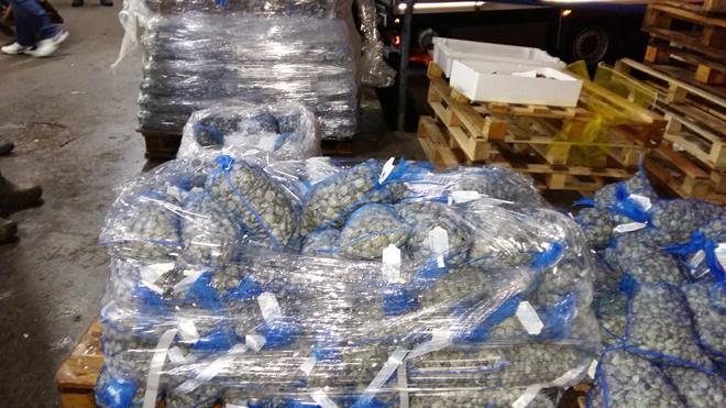 Inspección Pesquera de la Junta interviene más de tres toneladas de pescado y marisco en Mercamálaga